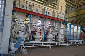 Indonesia 8t/h wood pellet production line